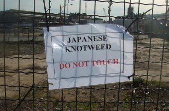 japanese_knotweed_legislation