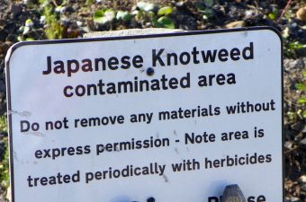 japanese_knotweed_regulations